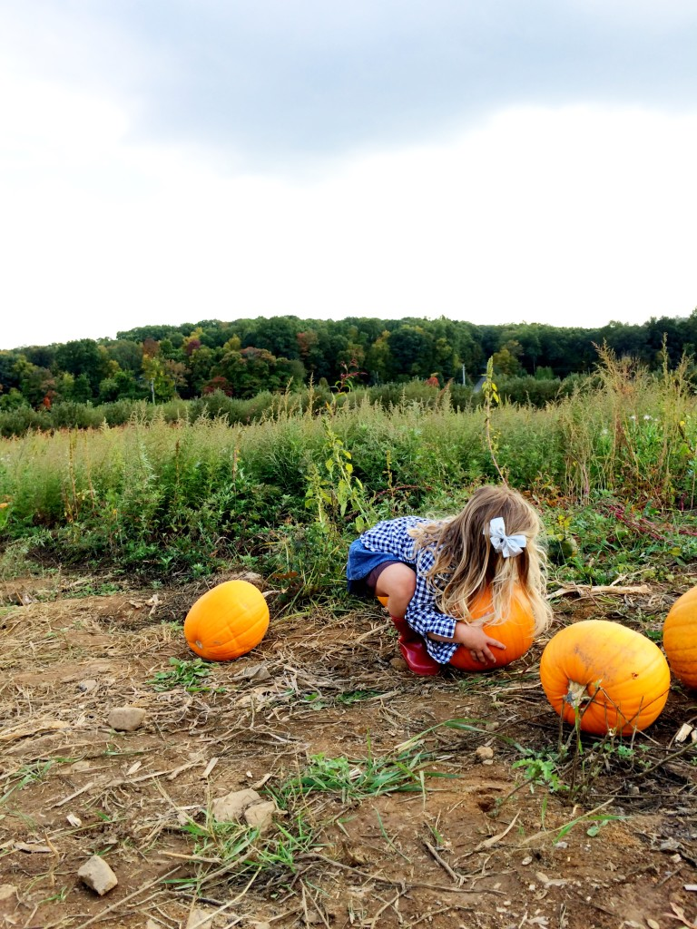 pumpkin picking 12