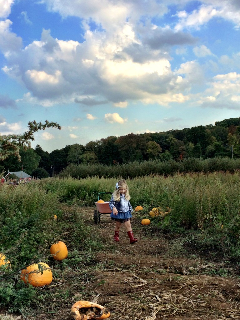 pumpkin picking 16