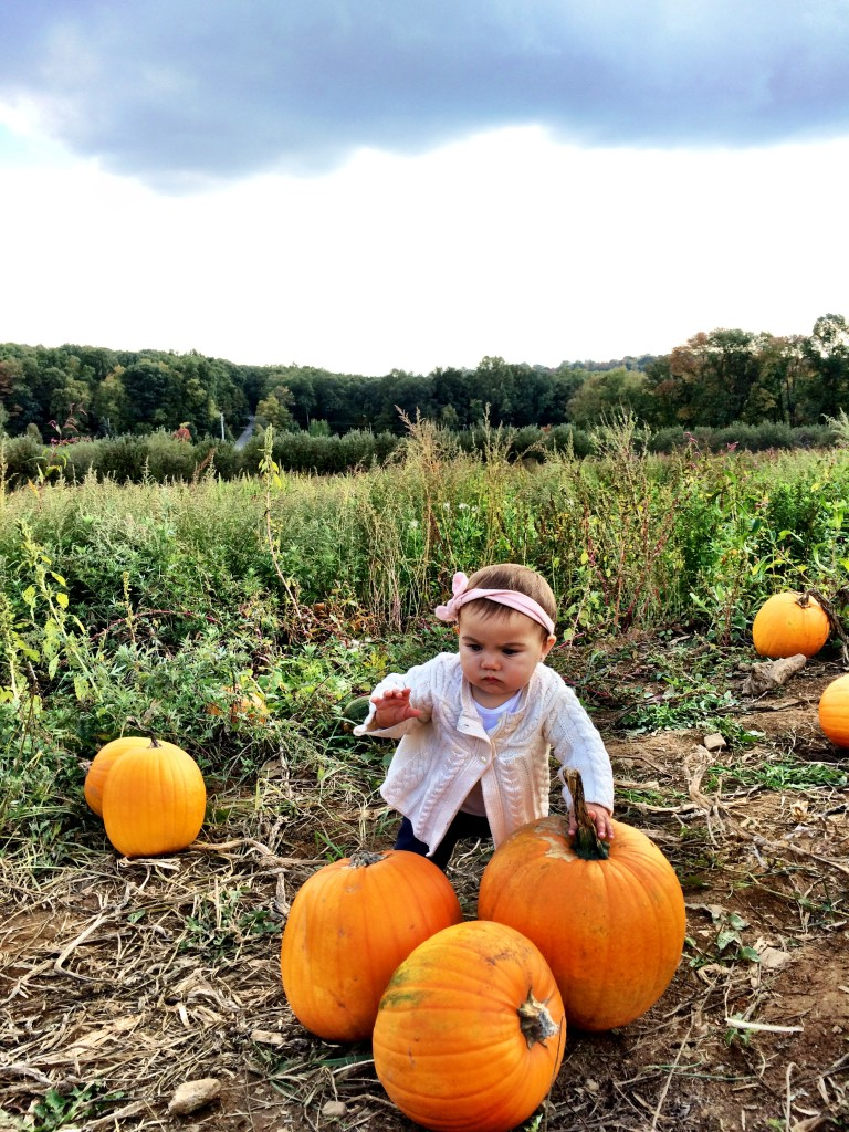 pumpkin picking 18