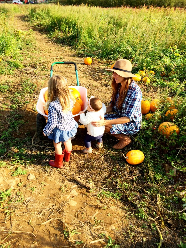 pumpkin picking 5